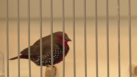 Nationale vogelshow bij De Paradijsvogel