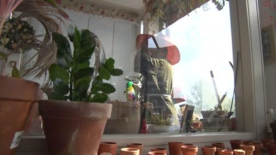 Plantenmedium legt contact met overleden kamerplanten